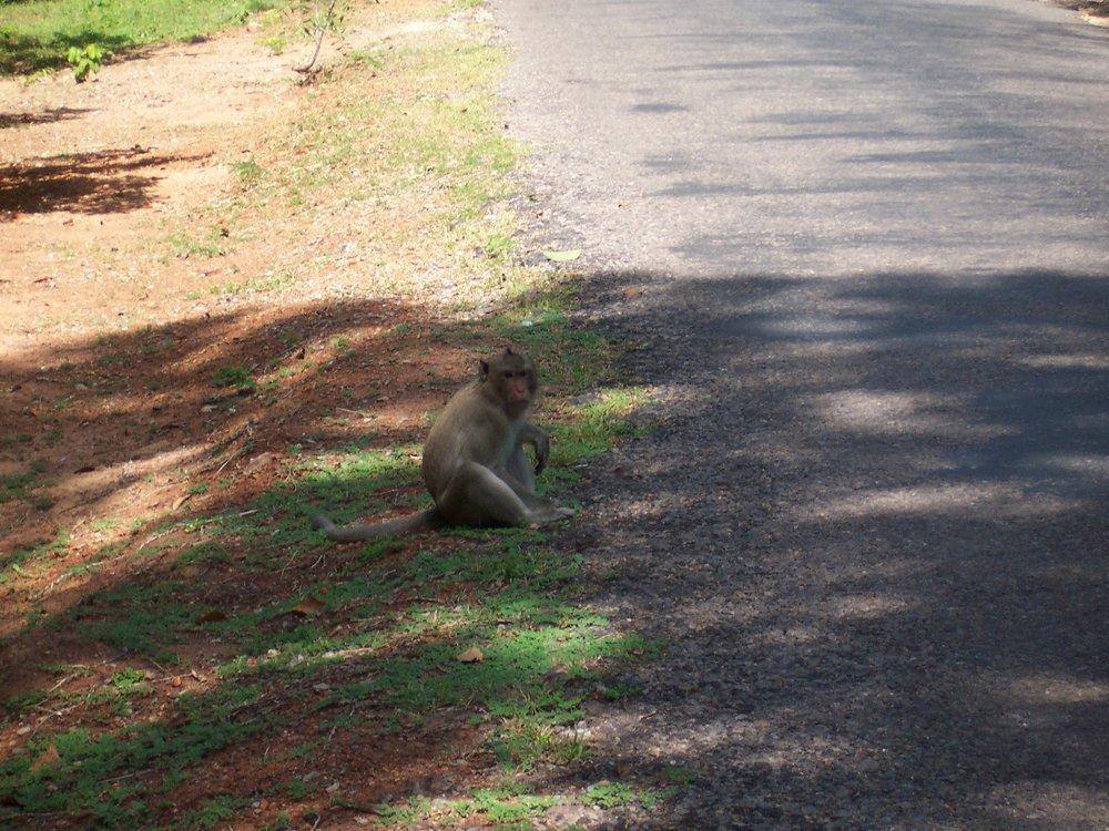 cheeky monkey.jpg