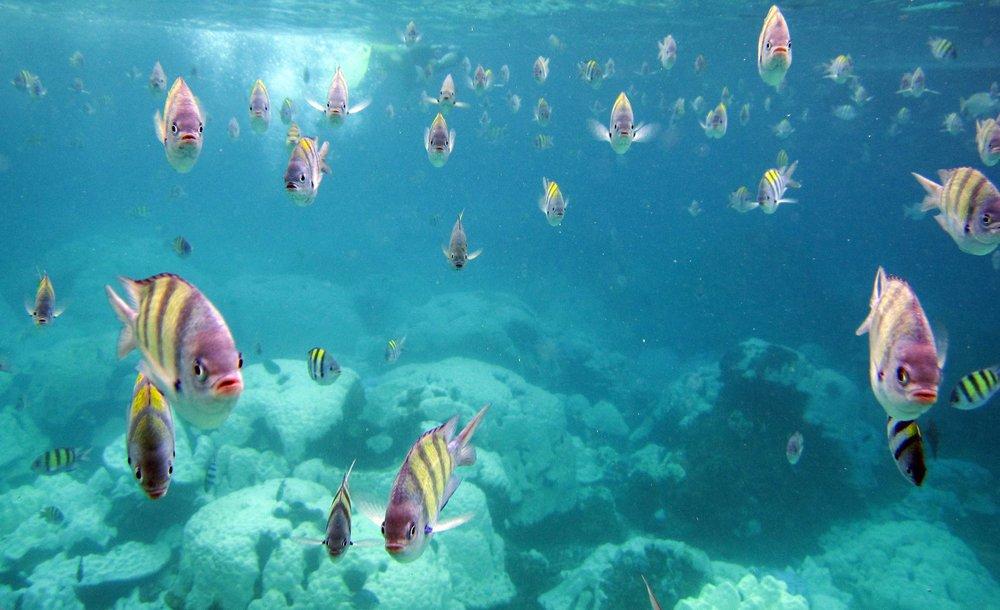 bleached reef 5.jpg