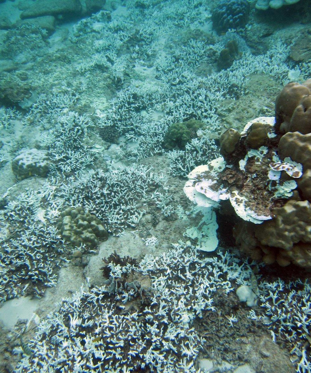 bleached reef 3.jpg