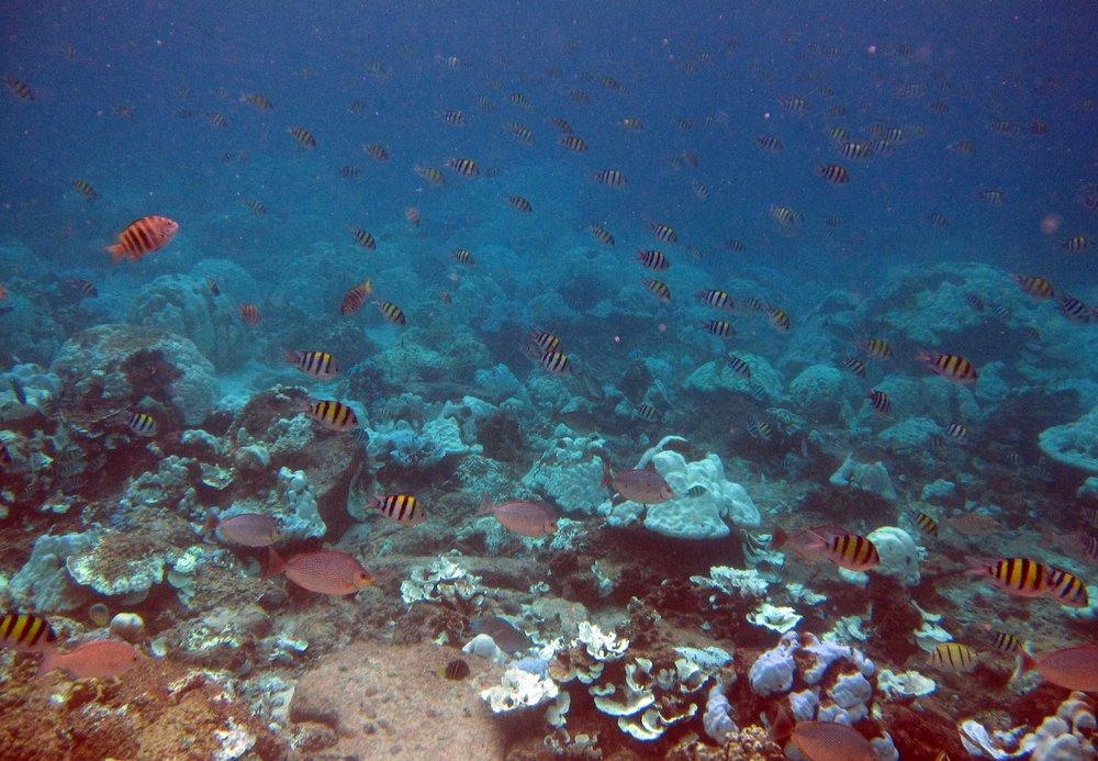 bleached reef.jpg