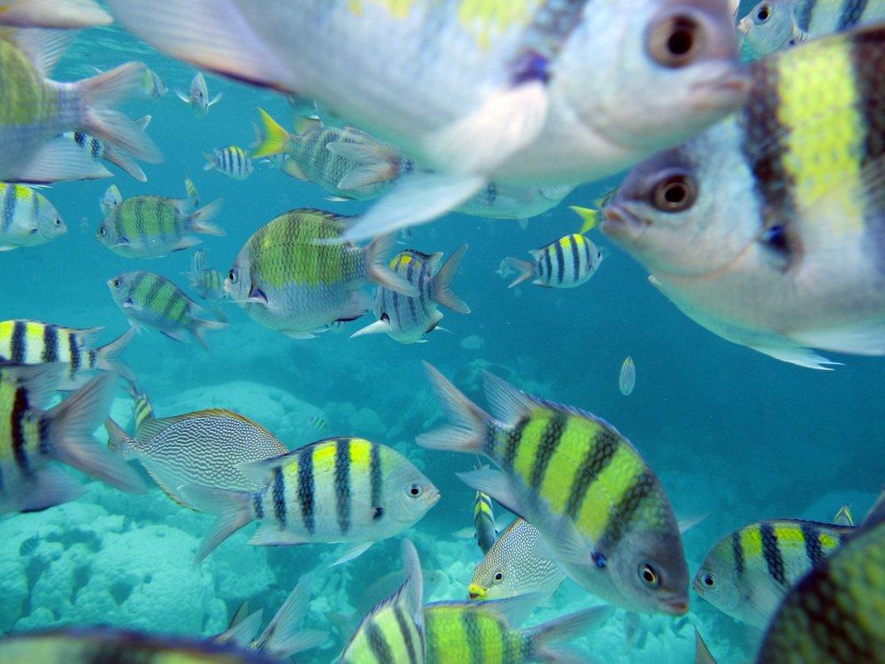 Racha Noi fish bowl.jpg
