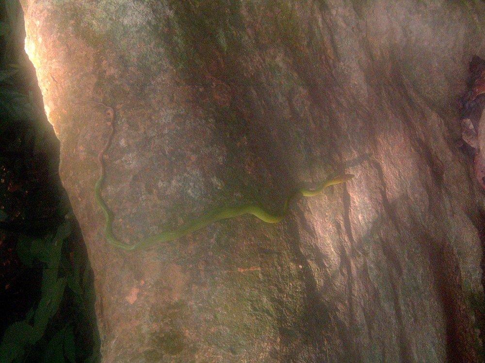 taman negara snake.JPG
