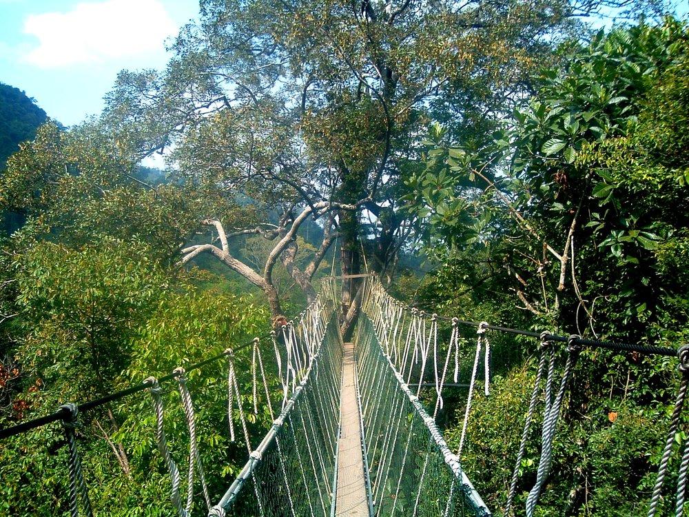 canopy walkway 2.JPG