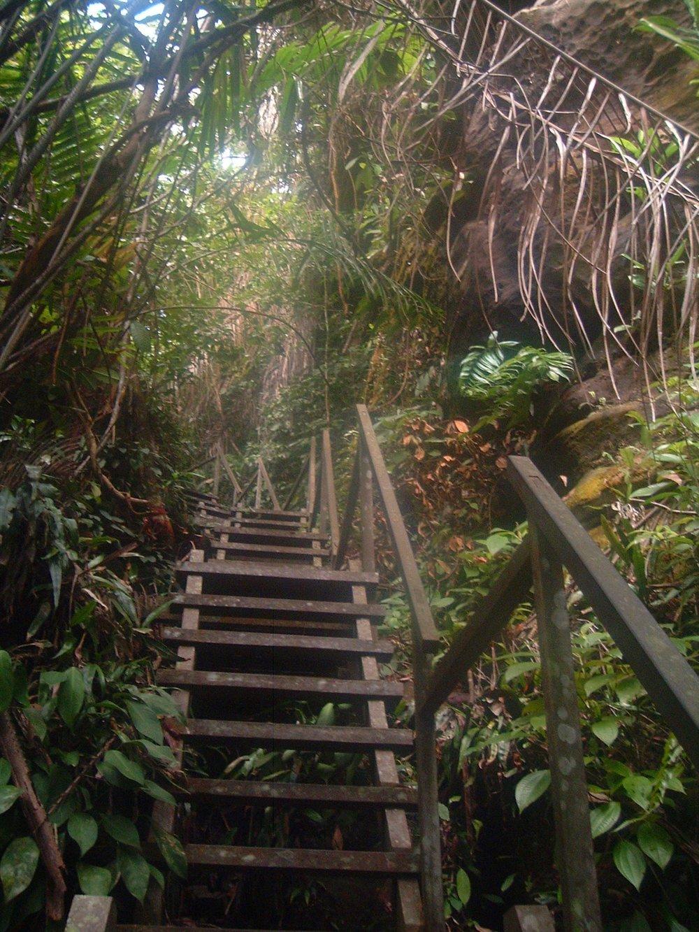 bako trail.JPG