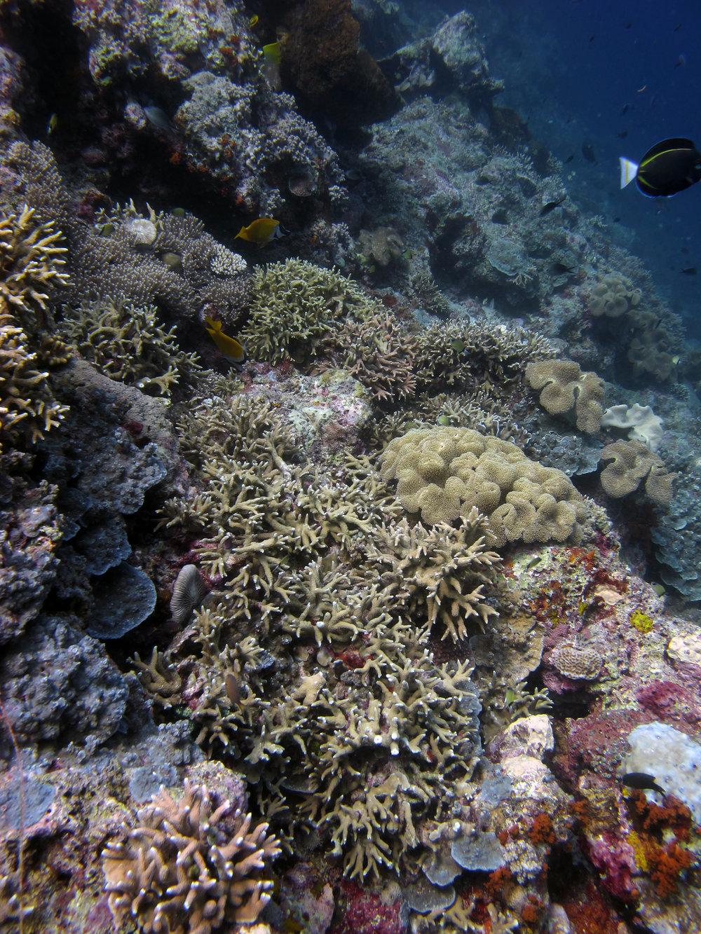 great reef shot.jpg
