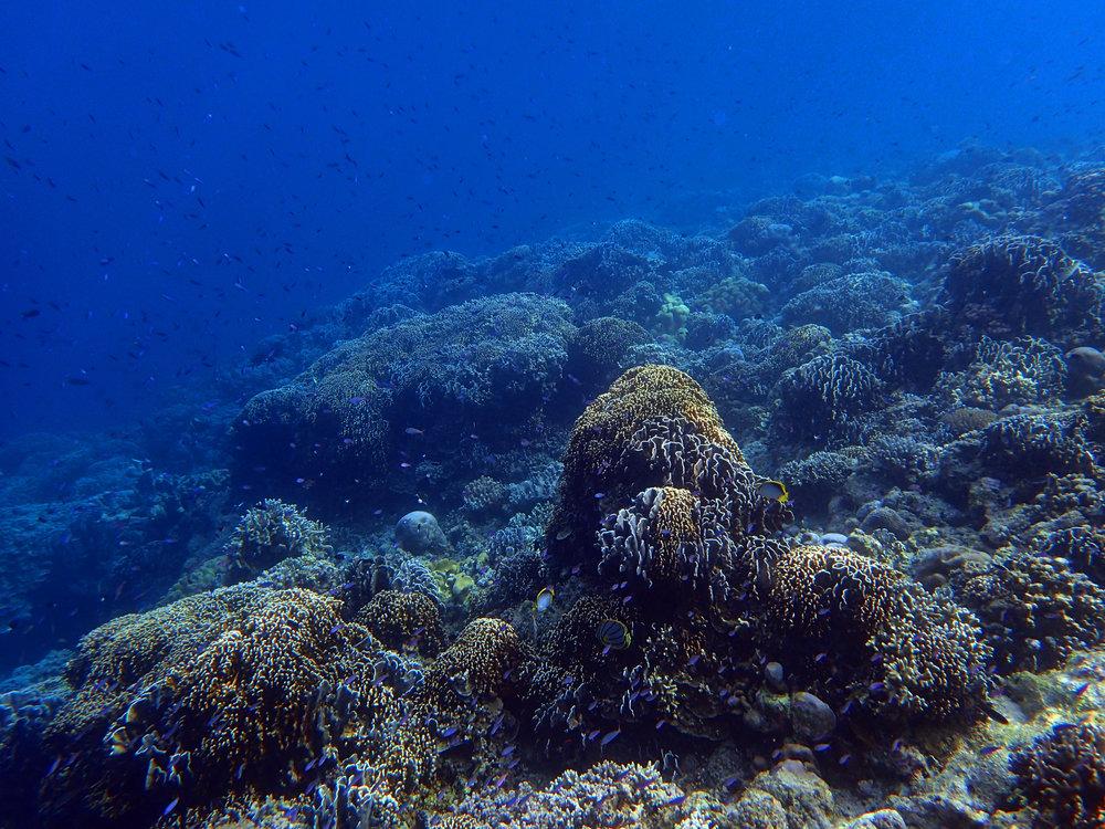 great snorkeling spot.jpg