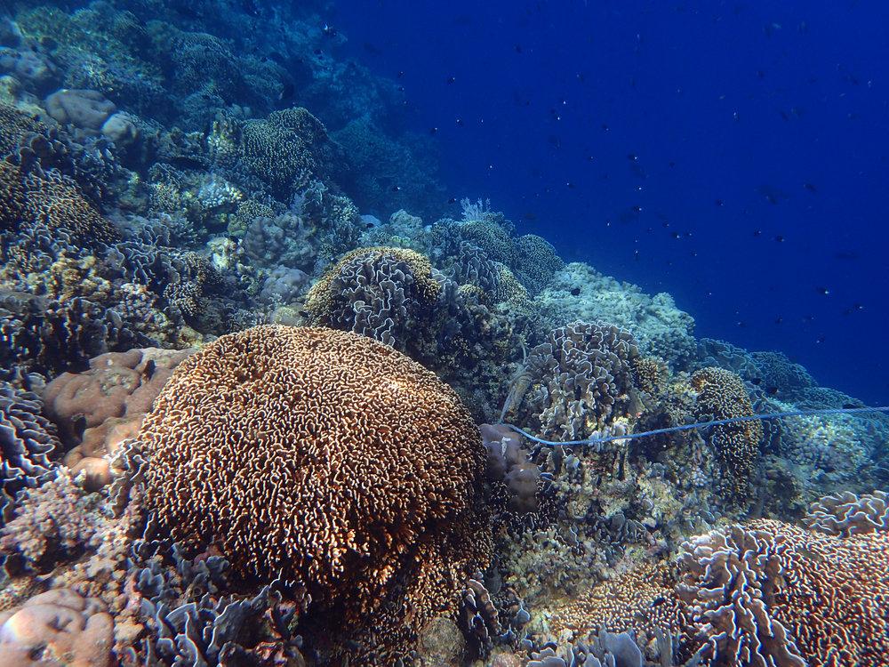 as seen on snorkel.jpg