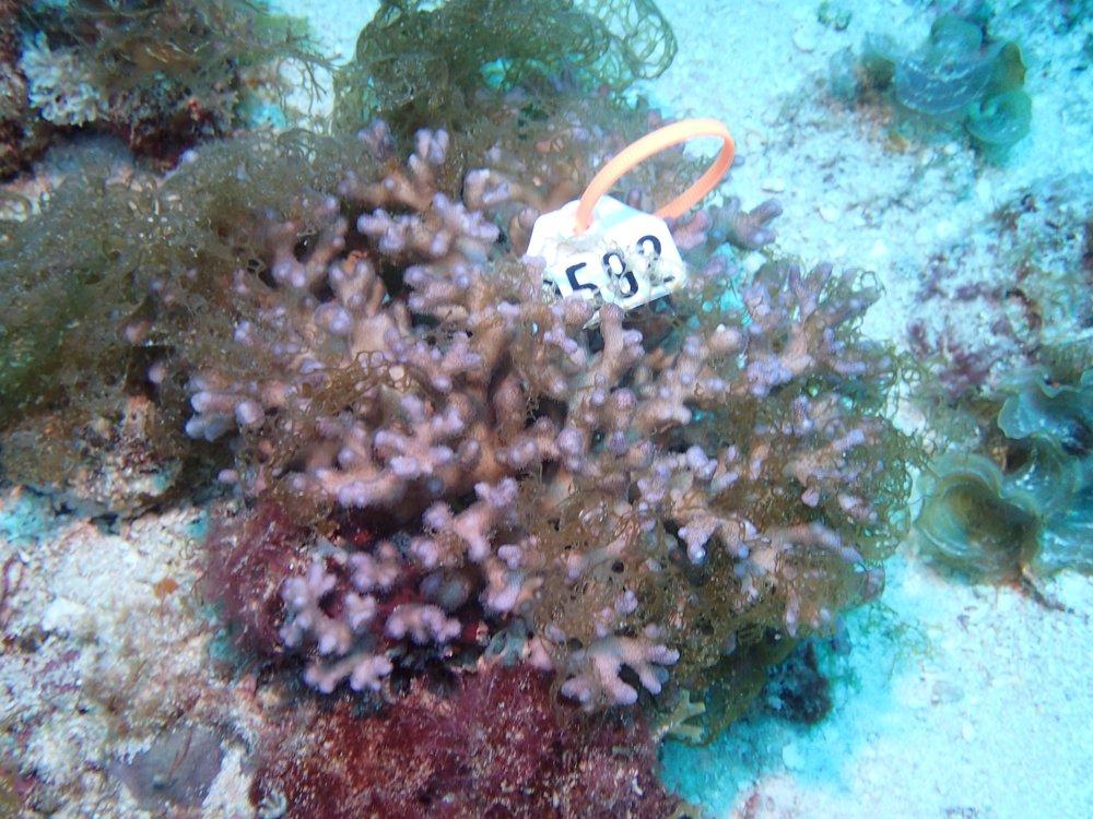 NC colony 36 macro 1.jpg