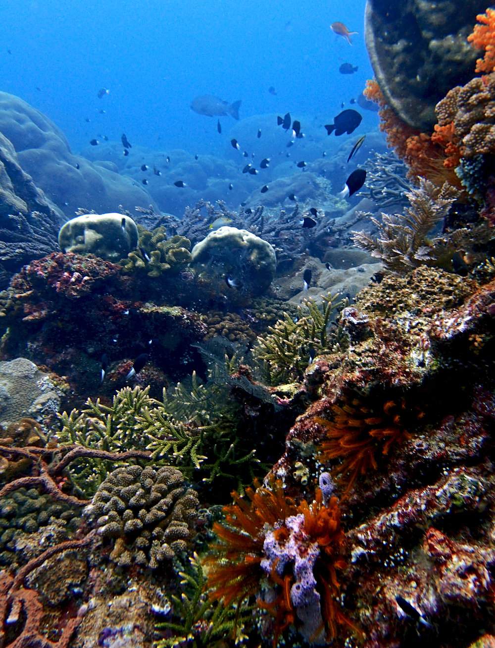 great shot of Coral Paradise.jpg