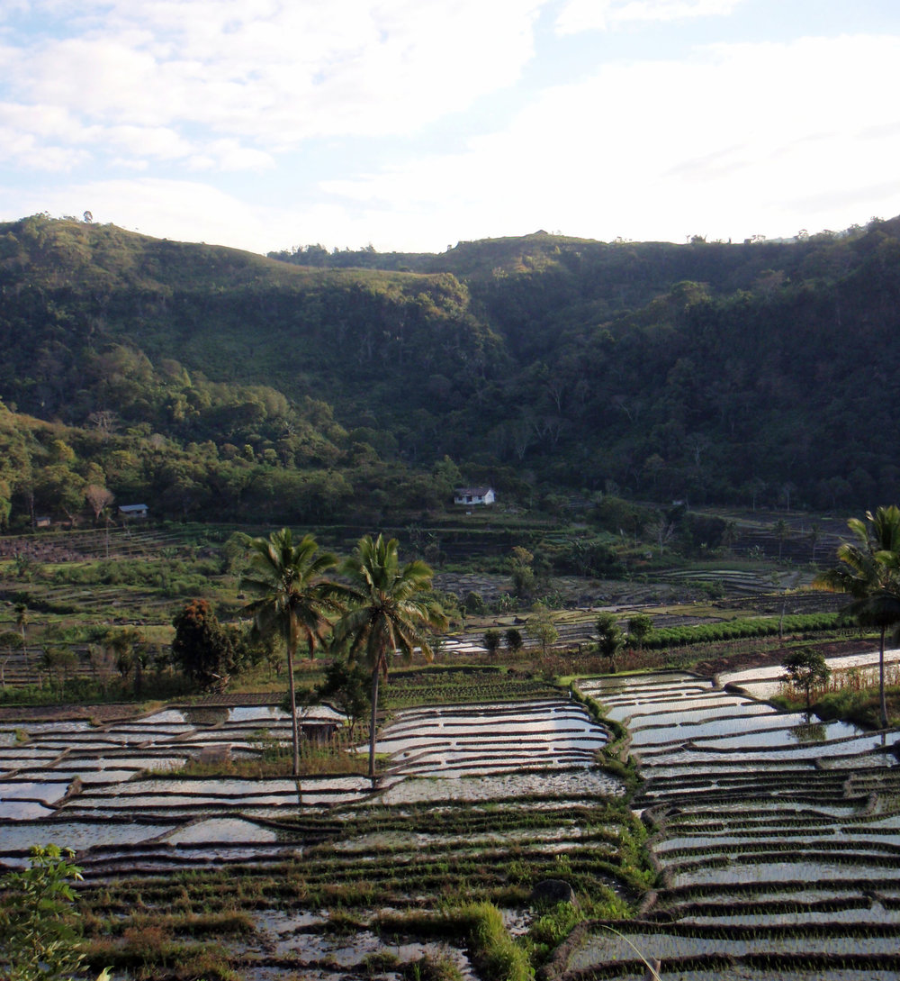 more Moni rice terraces.jpg