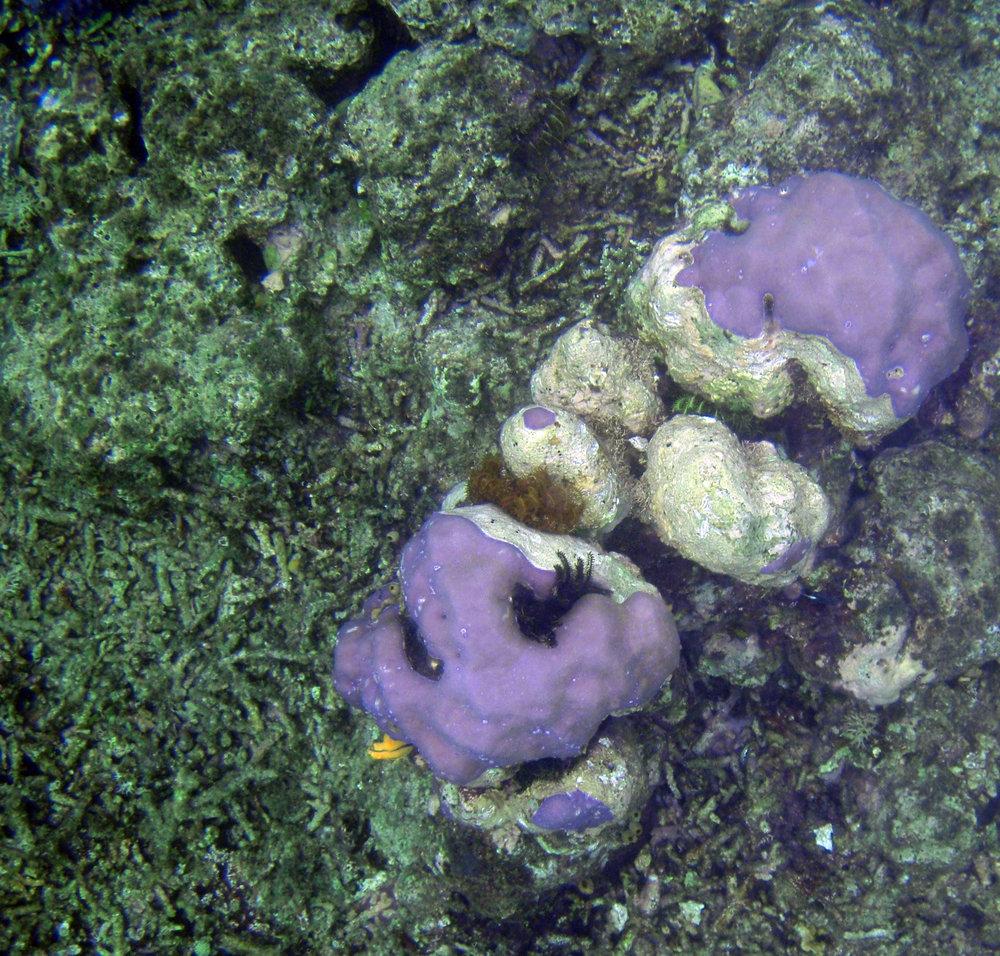 dead coral.jpg
