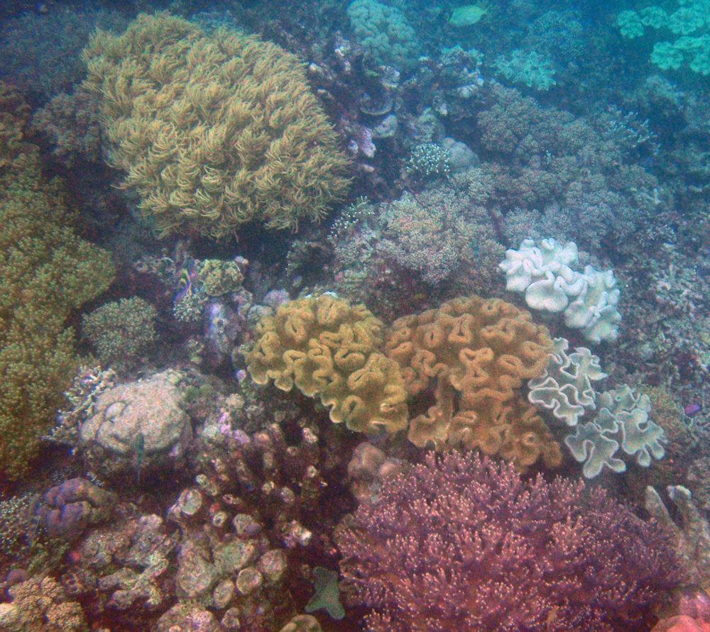 coral garden 2.jpg