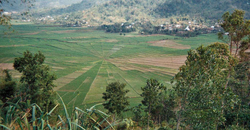 Indonesia crop circle.jpg