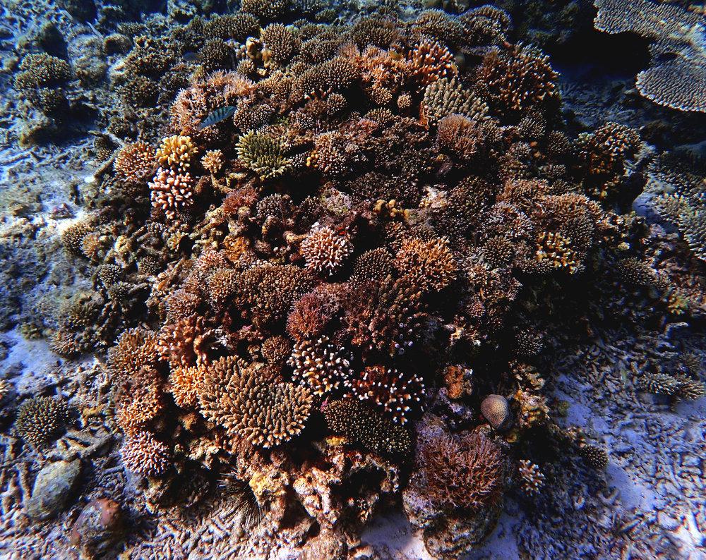 Spermonde Archipelago.jpg