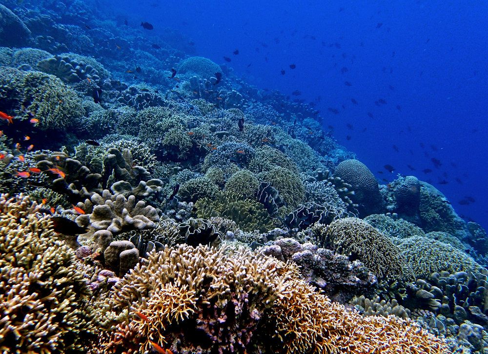 Pulau Ai Banda.jpg