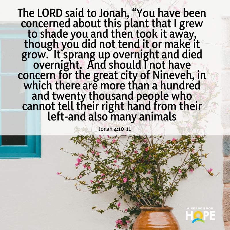 Jonah 4_10-11.jpg