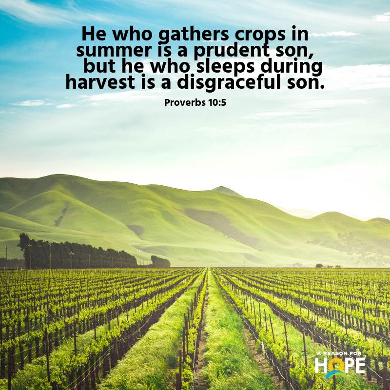 Proverbs 10_5.jpg
