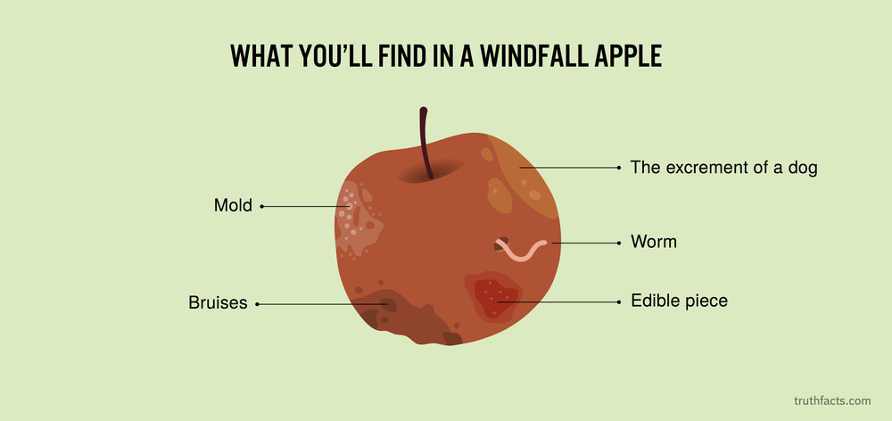 What you'll find in a windfall apple