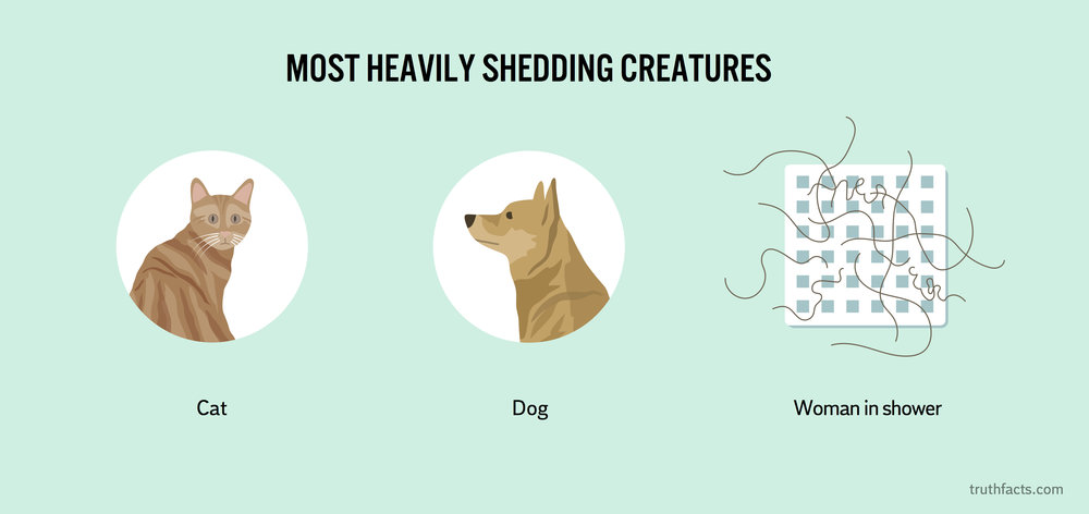 Most heavily shedding creatures