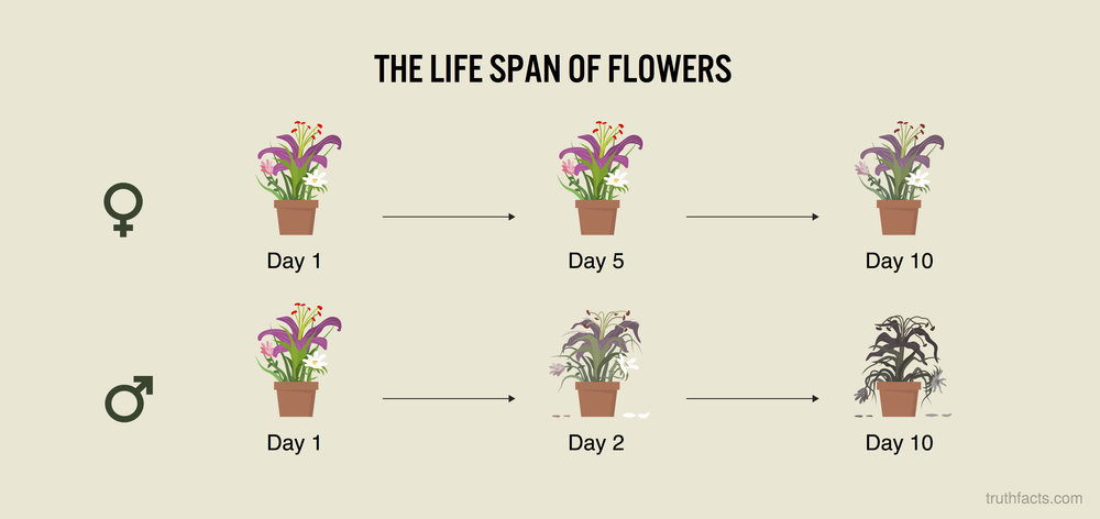 The life span of flower