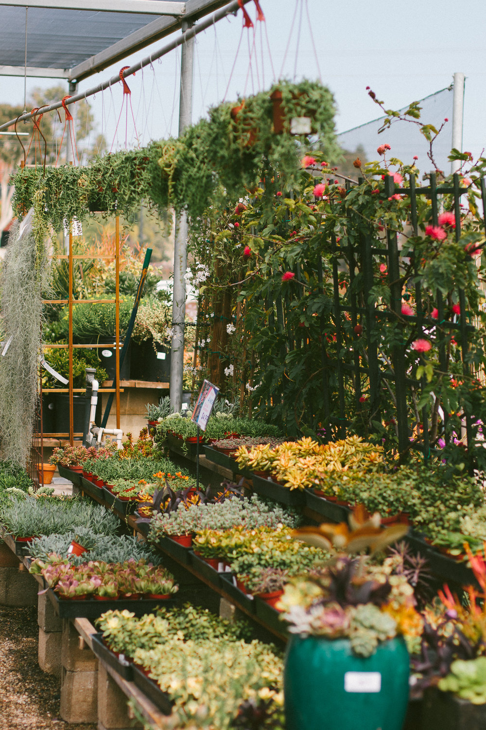 The Best Plant Shops in Los Angeles — Black & Blooms