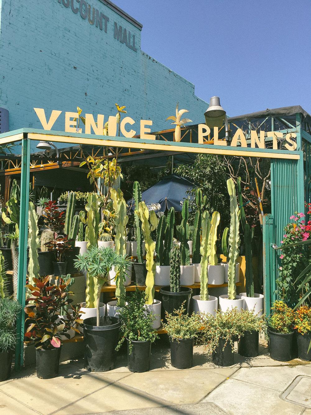 venice plants 1