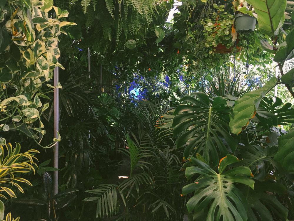 venice plants 2