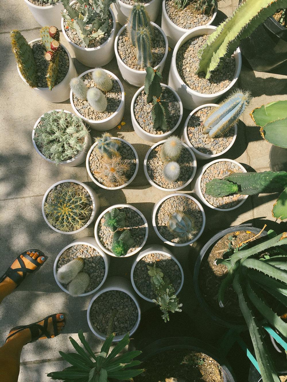 venice plants 4