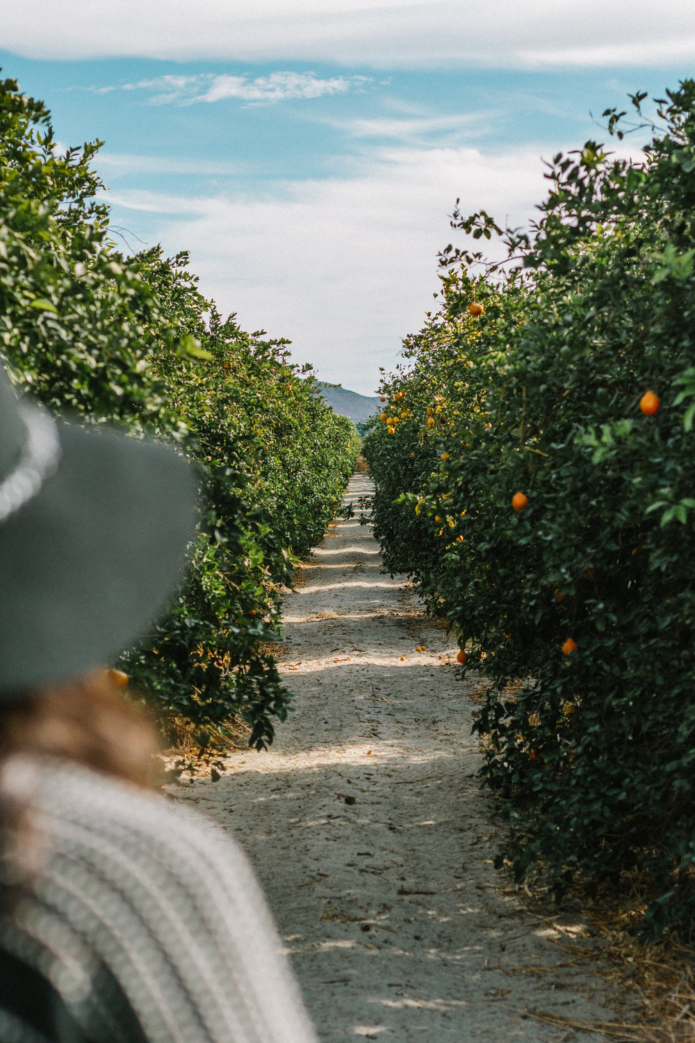 borrego springs orange orchard 2