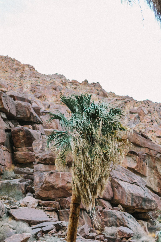 Anza-Borrego Desert State Park 5