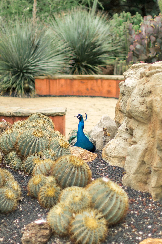 Los Angeles County Arboretum 2