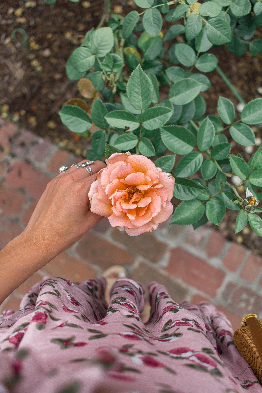 la arboretum rose garden 19