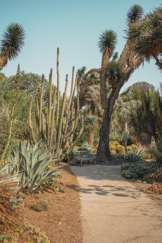 huntington library desert garden 3