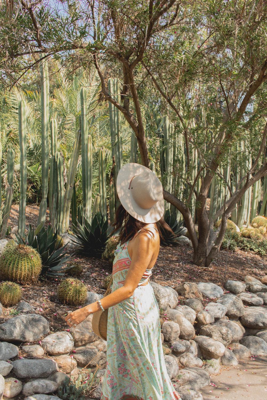 huntington library desert garden