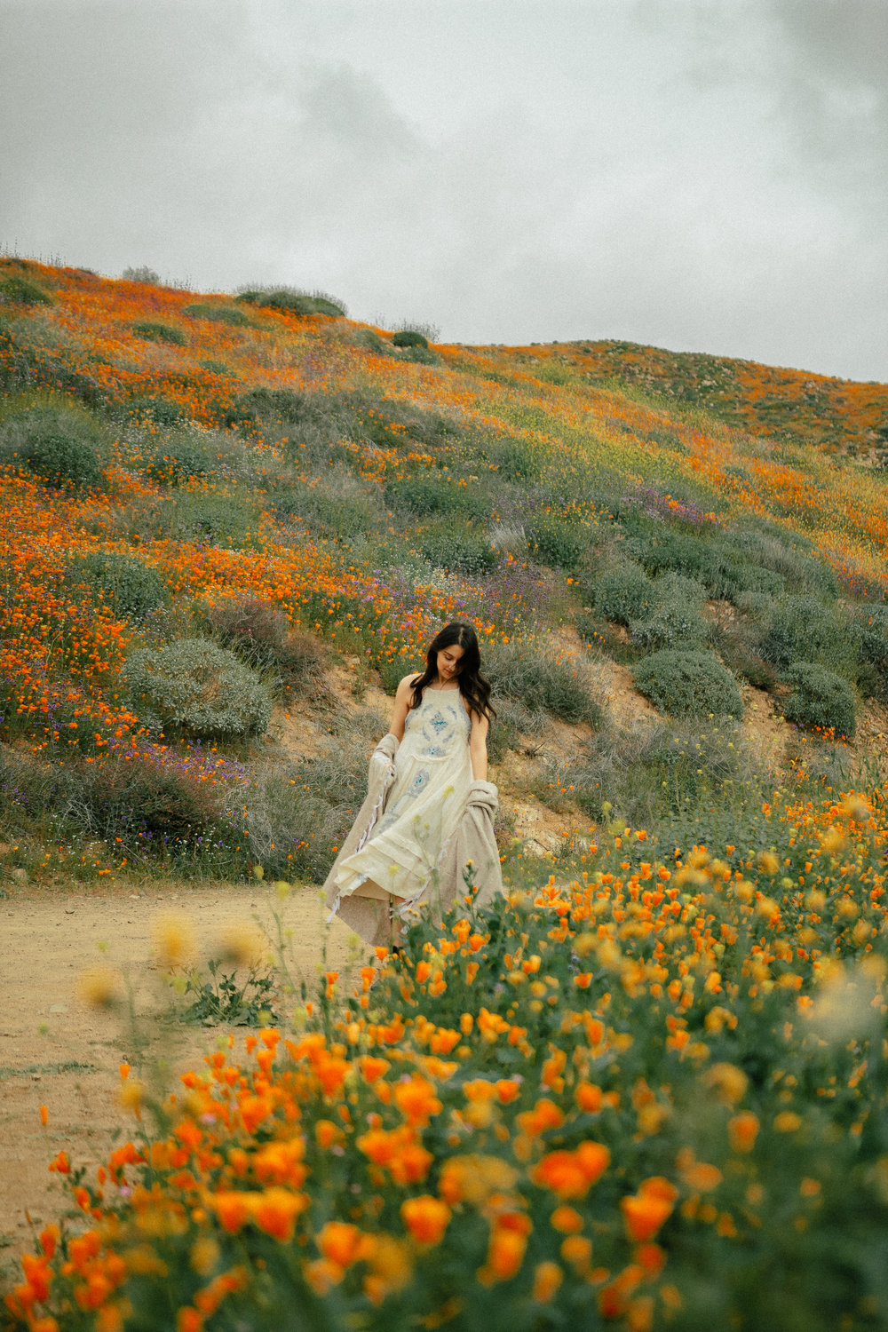 poppy fields california superbloom