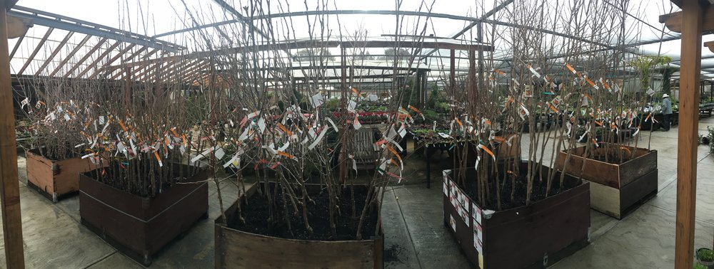 Fruit trees as far as the eye can see...