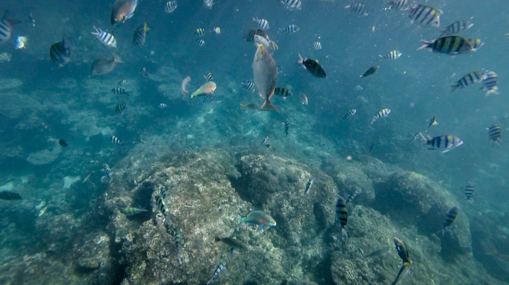 fish swim-2