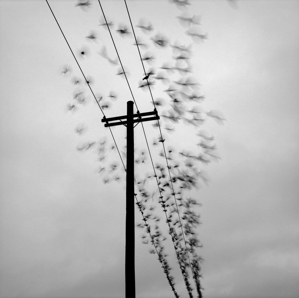 Birds, Portland. Photo by Austin Granger