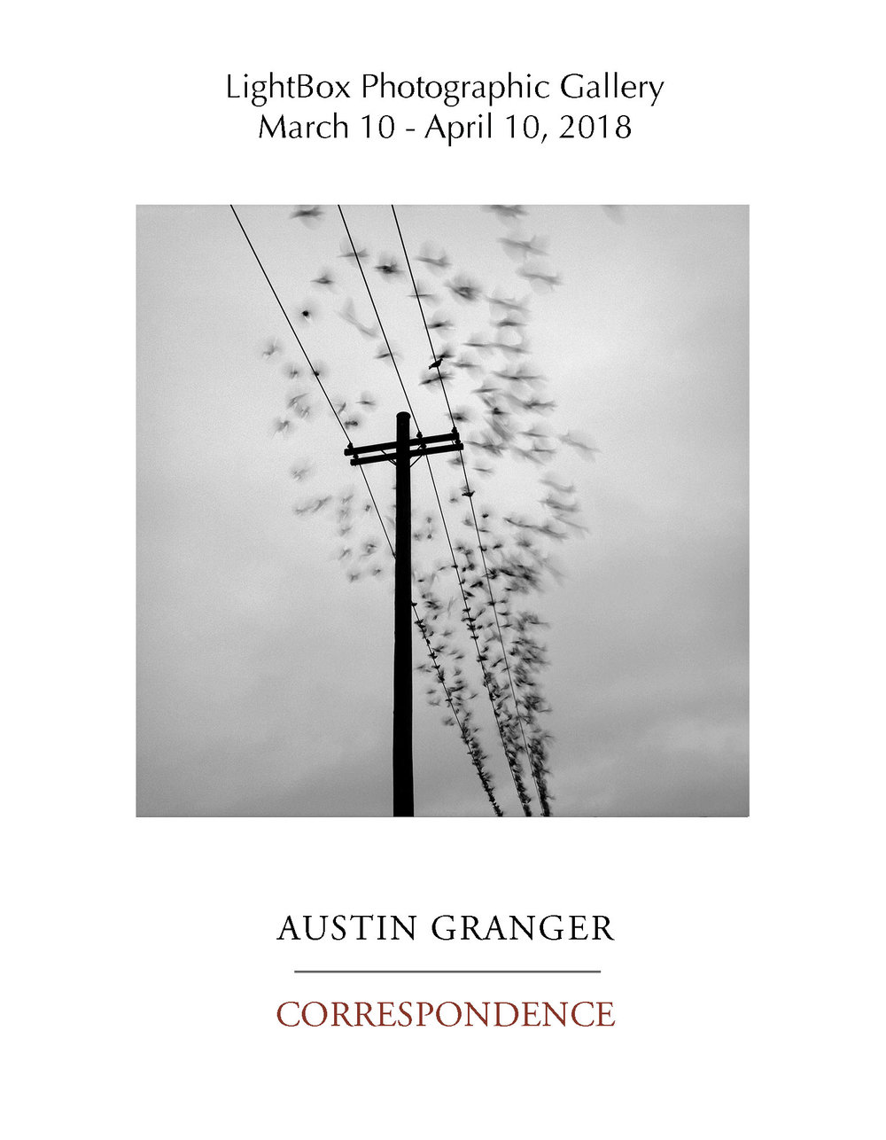 Birds, Portland. Austin Granger