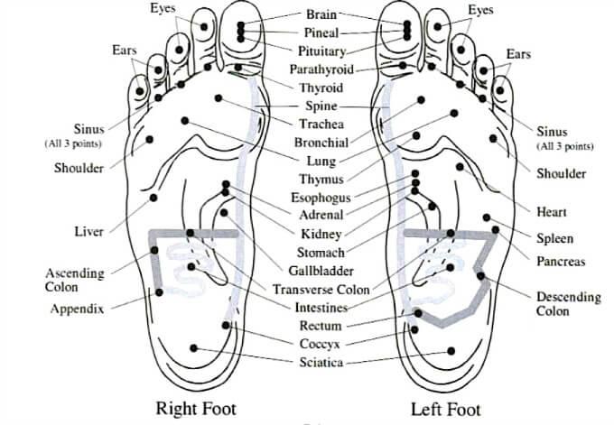 feet-vita-flex-points.jpg