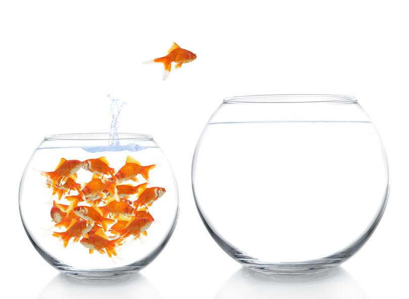 Goldfish group.jpg