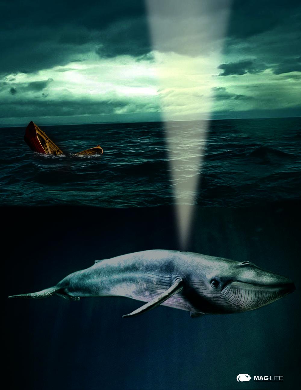 Whale Light.jpg