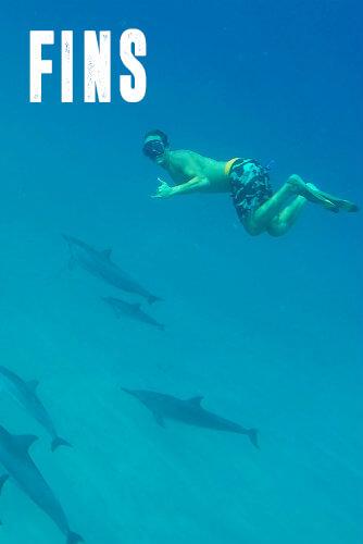Swim With Wild Dolphins - $72
