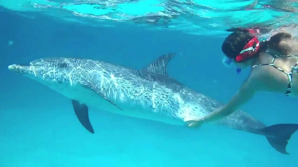 swim with wild dolphins - from $89