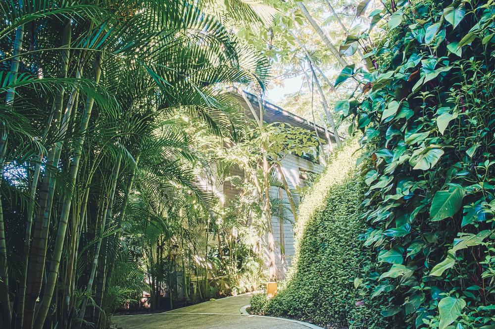 Common - Jungle Path Casa.jpg