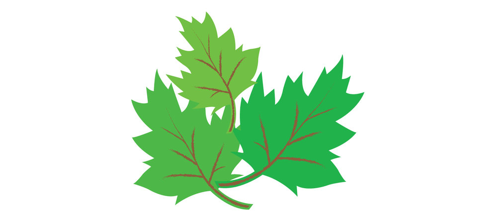 Leaves_4.jpg