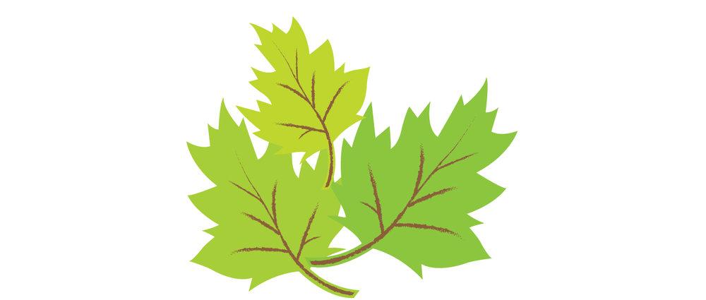 Leaves_5.jpg