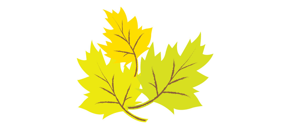 Leaves_6.jpg