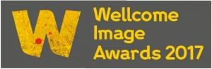 Wellcome logo.jpg