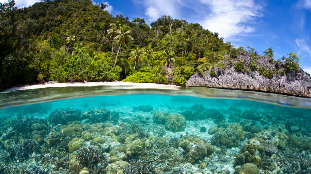 PNG Island SML 1250.jpg